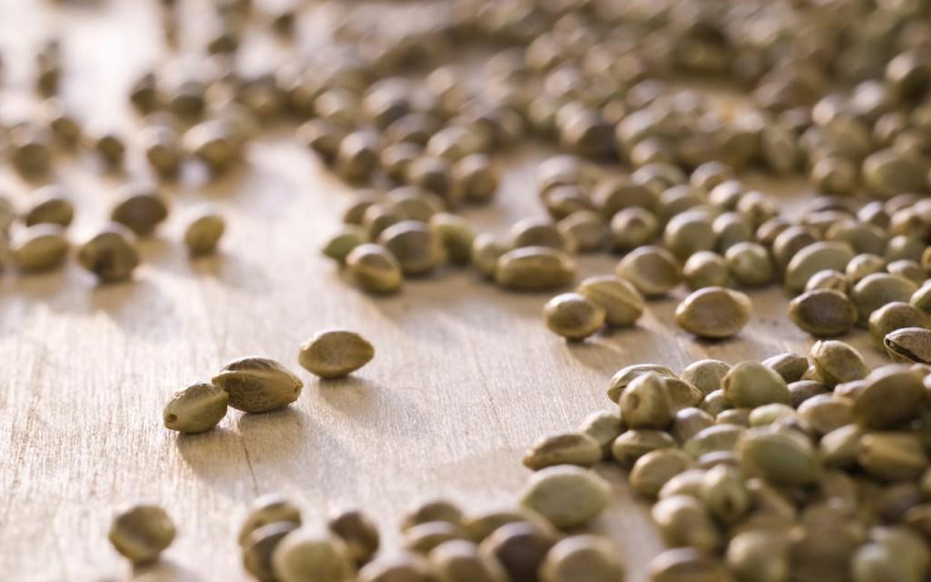 La graine de chanvre bio, une source importante d'Omega 3 pour votre bien être