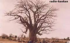 Mali-Bamako: Baobab Mosquée: Incroyable ! Mais vrai…