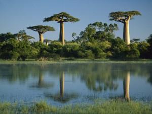 Madagascar, l'Île aux Baobabs